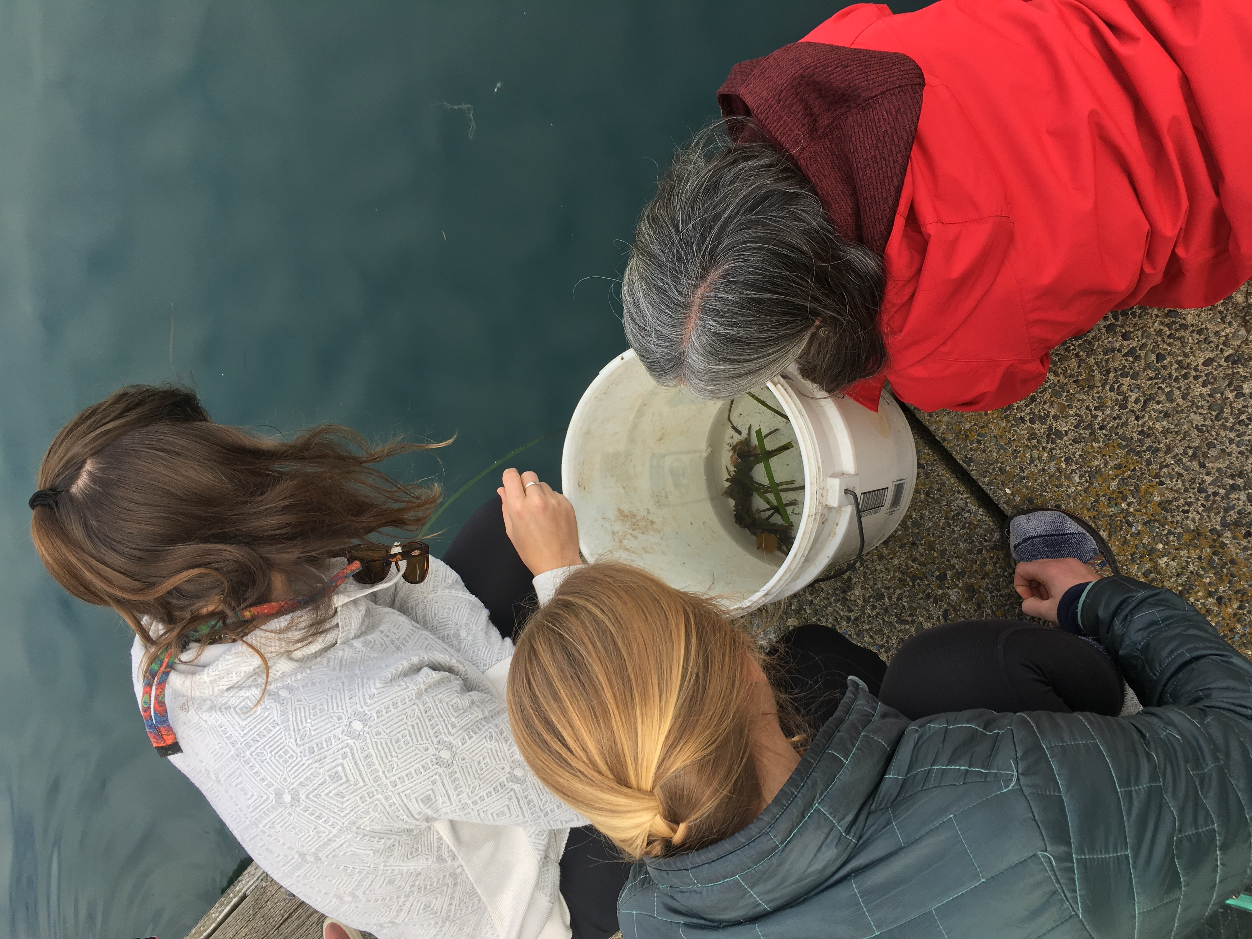 Two students and a professor crouching beside a body of water, collecting inverts into a bucket